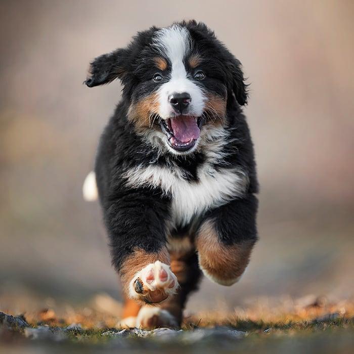 benessere dei cani